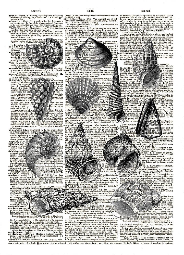 SEASHELLS Antique Artwork Vintage Dictionary Art Print No. 0109