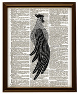 Stylized ROOSTER Bird Farm Animal Vintage Dictionary Art Print No. 0070 - $12.00
