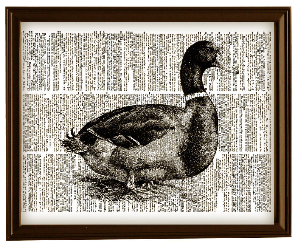 DUCK Aquatic Bird Animal Vintage Dictionary Page Art Print No. 0043