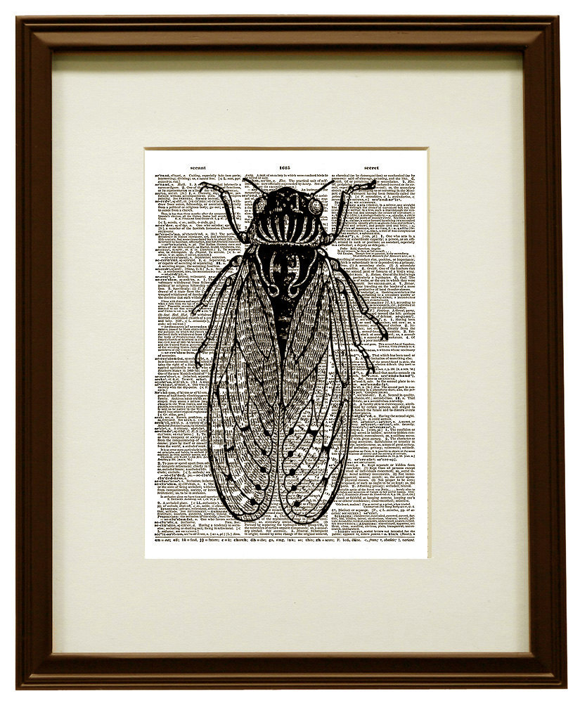 CICADA Flying Insect Black and White Vintage Dictionary Art Print No. 0023