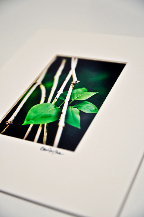 'New Growth' Fine Art Print - 4x6 print matted to 8x10