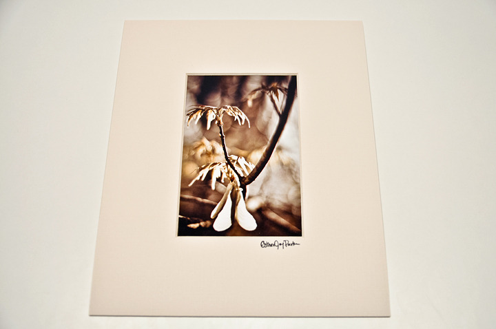 'Spring Branch' Fine Art Print - 4x6 print matted to 8x10