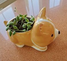"Corgi Dog Planter + Succulent, String of Beads, 5"" Puppy pot, curio herreianus image 4"