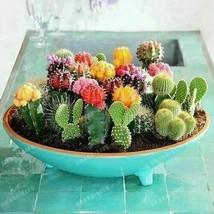 100 pezzi / pacco Semi di cactus misti Piante ornamentali multiformi 100... - $6.81