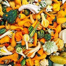 Non-gmo Ornamental Gourd Mix 25 Seeds - Open-pollinated (Small Mixed) - $5.93