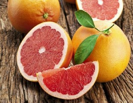 2'' to 3'' toronja rosada pink grapefruit live tree plant - Outdoor Living - $80.99
