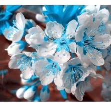 Blue sky white cherry thumb200