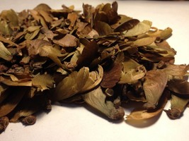 10 Seeds - Banisteriopsis Caapi Yellow (Yage) From Peru - $9.99
