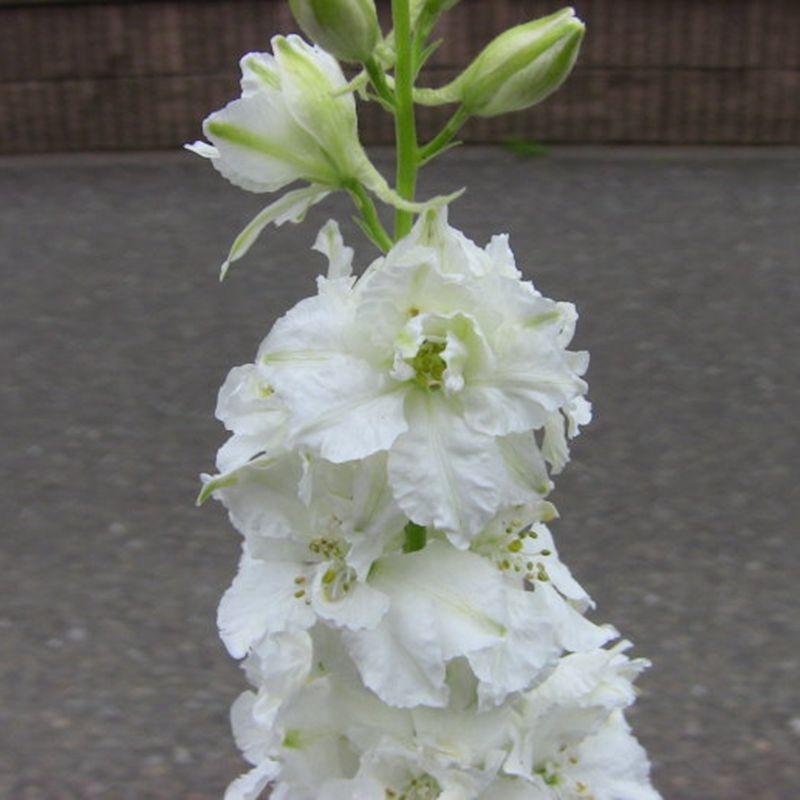 20x Flower Plant 3cm Wood Craft Embelishments Laser Cut Shape MDF