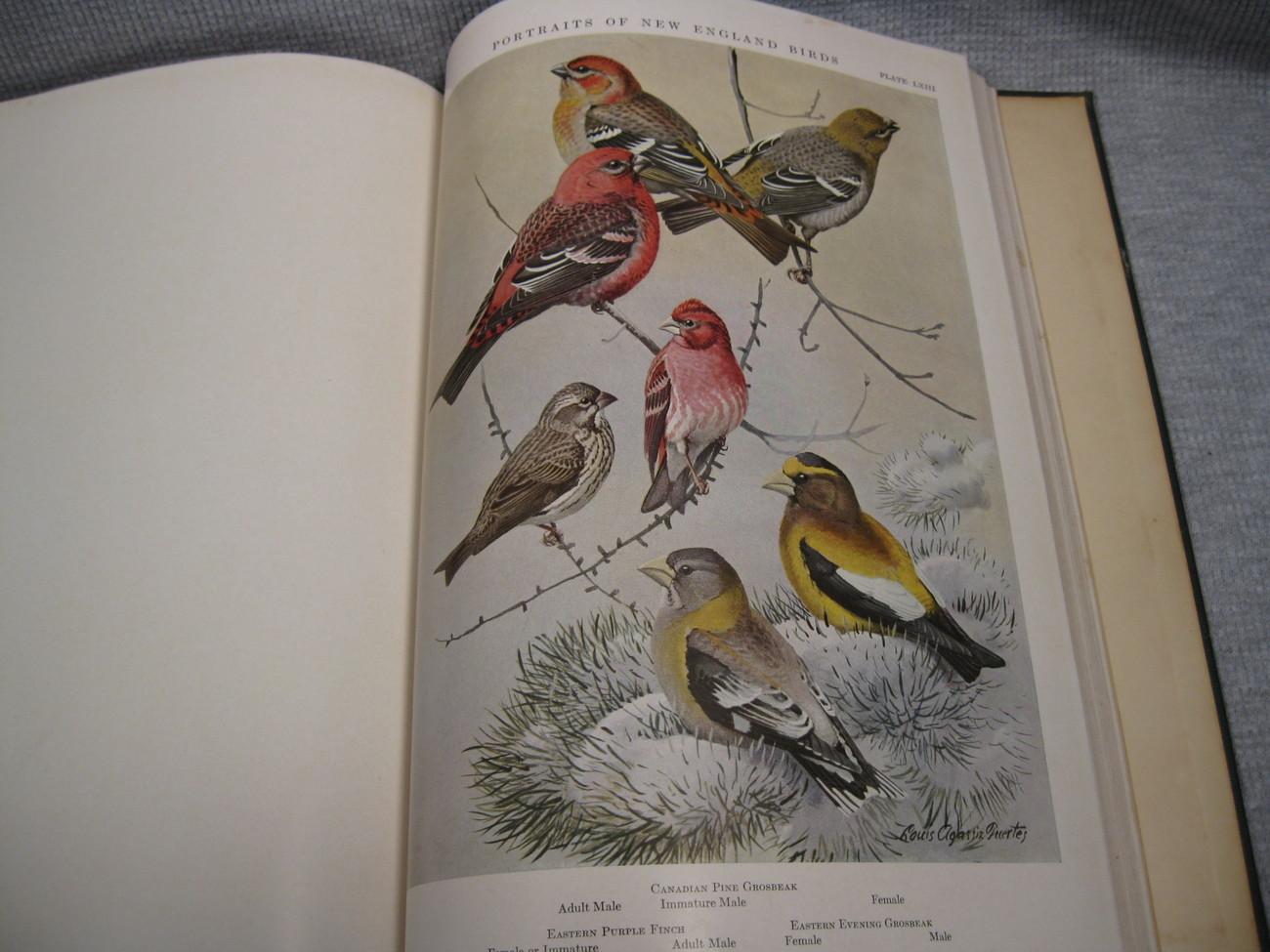 Portraits of New England Birds for Edward Howe Forbush 1932 Fuertes Brooks