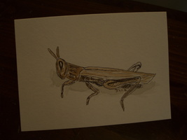 Handpainted greeting Blank Card with grasshopper - $5.00