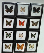 Rare Real 12 Butterfly Insect Display Taxidermy in Wood Framed Collectib... - $108.00