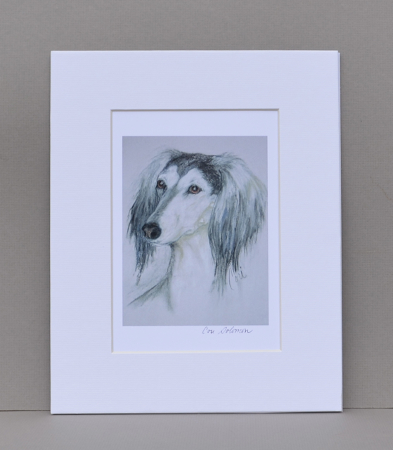 Saluki Sight Hound Dog Art Print Signed Matted Solomon