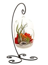"""Bliss Gardens Air Plant Terrarium Kit With 8"""" Oval Glass/Geode Crystal/S... - $66.32"""