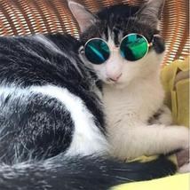 Cat Sunglasses Eye-wear Protection - $19.95