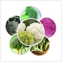 200pcs 10kinds Broccoli Seeds Organic Heirloom Seeds Vegetable Seeds Best - $2.20