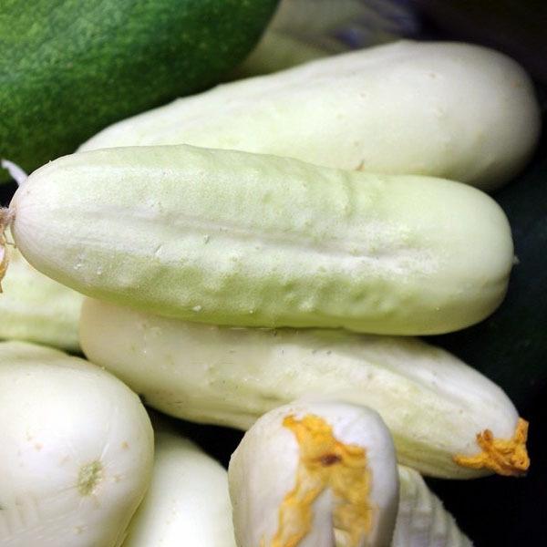 Egrow 50 Pcs/Pack White Cucumber Seeds Garden Balcony Vegetable Fruit Cucumber S