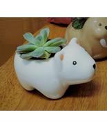 "Echeveria Succulent in Polar Bear Planter, 5"" white glazed ceramic anima... - $16.99"