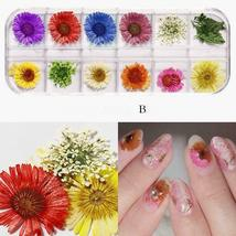 Dry Flowers Nail Art Decorations 3D Natural Daisy Sun Flower - 12 Colors / Box image 9