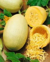 75 Spaghetti Winter Squash Seeds Heirloom Vegetable NON-GMO Heirloom Gardening - $1.79