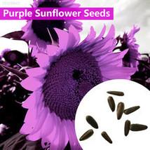 9AC6 58C4 Purple Sunflower Seeds Helianthus Annuus Seeds Flower Seeds Ga... - £1.64 GBP