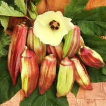 Okra Seeds - Hill Country Red - Vegetable Seeds - Outdoor Living - Free Shippng - $27.99+