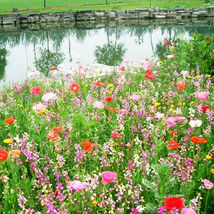 200 Mix Waterlogging Tolerance Wildflowers Seeds Wild Flower Garden Flower - $13.58