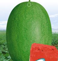 BEST PRICE 6 Seeds Light Green Ellipse Watermelon,DIY Watermelon Seeds 311032 DG - $4.99
