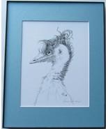 Wild Emu, Framed Matted Wildlife Art Print, Pen and Ink, Bird Art Drawing - $39.00