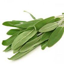 100 Seeds- Organic - Broadleaf Sage - Culinary Spice - $7.99