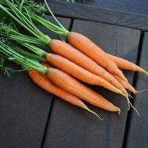 100M Seeds of Romance Carrots Conventional & Pelleted - $184.14