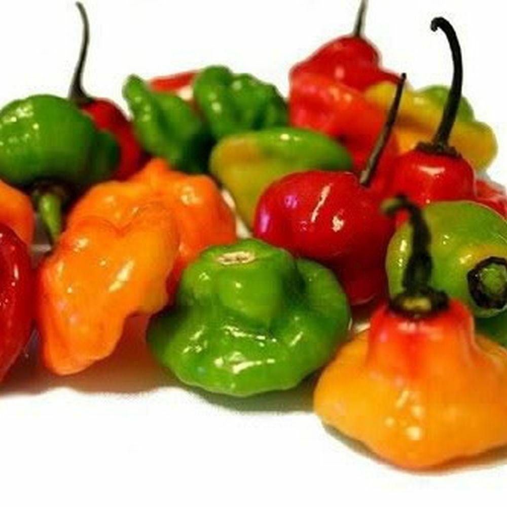 Ajicito, Aji Dulce, Aji Gustoso, Cachucha, Puerto Rican Sweet Pepper 50 seeds