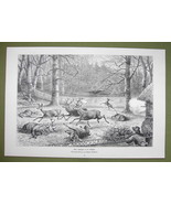 DEER HUNTING in Saxony Forest at Gohrde Germany - VICTORIAN Era Print - $13.76
