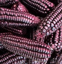 Purple Popcorn 50 seeds Grow you own popcorn Ornamental CombSH G33 - $13.58