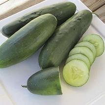 Raider F1 Cucumber Seeds (80 Seed Pack) - $4.89