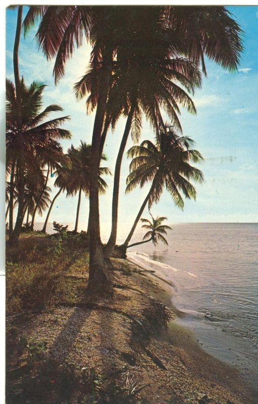 Puerto Rico, Tropical Scene in Beautiful Puerto Rico 1964 used Postcard