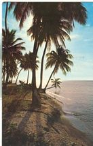 Puerto Rico, Tropical Scene in Beautiful Puerto Rico 1964 used Postcard  - $4.99