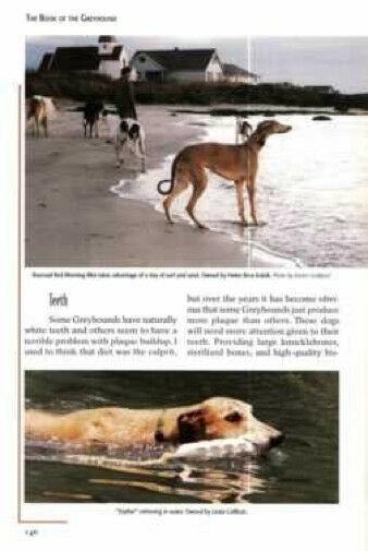 The Book of the Greyhound :  Sue Lemieux :  LikeNew Hardcover : Signed