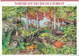 Nature In America USPS Stamps Sheet MNH Scott 3899 Northeast Decid. Fore... - $9.87
