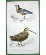 BIRDS Woodcock & Black Plover - 1849 H/C SUPERB Color Antique Print - $16.83
