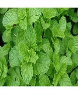 SPEARMINT FRAGRANCE OIL - 2 OZ - FOR CANDLE & SOAP MAKING BY VIRGINIA CA... - $6.55