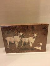 """Vintage Dalls Sheep Rams Puzzle Alaska Puzzle Co 1986 Size 13x20"""" - $12.19"""