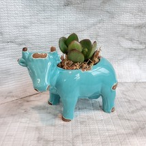 Blue Cow Planter with Baby Jade Succulent, Live Plant in Ceramic Animal Planter