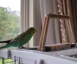 Small Pet Bird Cage Top Perch Toy Training Playground Parakeet Budgie Co... - $8.00