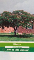 Mimosa 5 Gal Tree Live Flowering Shade Trees Beautiful Home Landscaping Plants - $98.95