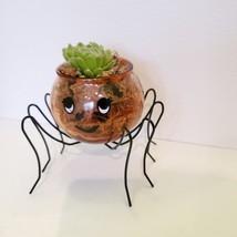 Spider Planter with Succulent, Halloween Pot, Sempervivum, Hens and Chicks image 4
