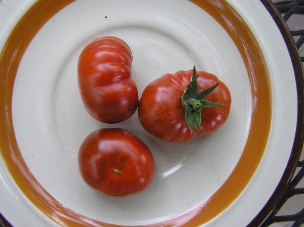 Petit Chocolat tomato seed - deep brown  cherry tomato
