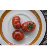 Petit Chocolat tomato seed - deep brown  cherry tomato - $4.05