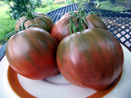 Royal Purple - beautiful shape and color in a slicing tomato - $4.50