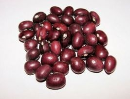 Organic True Red Cranberry Pole Bean Seeds 100ct ~ Open Pollinated Non-GMO USA - $21.99